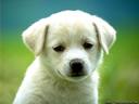 Προϊόντα Σκύλου