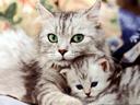 Προϊόντα Γάτας